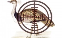 Siberian Bustards to go bust if courts don't act, petitioner says