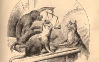 monkey-cats-justice