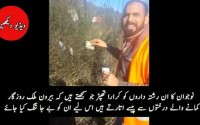 For overseas Pakistanis money doesnt grow on trees - See a Funny Video