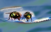 2113340-two-old-green-house-fly